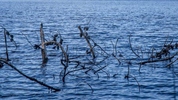 L'arbre dans l'eau